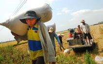17 ngân hàng được cho vay mua tạm trữ thóc, gạo