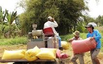 Giá lúa nhích lên nhờ mua tạm trữ