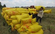 """""""Cò"""" lúa ăn chặn tiền bán lúa của nông dân"""
