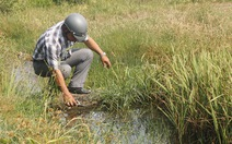 Nhà thầu bơm bùn không nhận trách nhiệm làm lúa chết