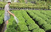 Nhiều giải pháp giúp người trồng hoa tránh thua lỗ