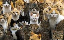 Độc đáo hòn đảo có 22 dân và 120 con mèo