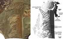 Phát hiện hóa thạch tôm hùm lớn như người