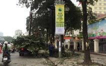 """Cộng đồng mạng tìm cách """"cứu""""6.700 cây xanh Hà Nội"""