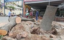 Sở Xây dựng Hà Nội phải trả lời chuyện chặt cây