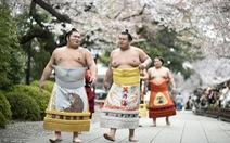 Xem đô vật sumo cận cảnh trên võ đàiđền Yasukuni