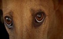 """Lan tỏa thông điệp bảo vệ chó từ chiến dịch """"Về đi Vàng ơi"""""""