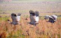 Lượng khách đến Vườn quốc giaTràm Chim tăng mạnh