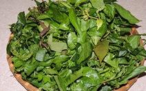 Ra Cù Lao Chàm ăn... rau rừng