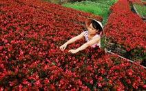 Nông dân Sa Đéc sang Hà Lan, Đức học trồng hoa