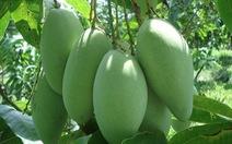 Tìm thị trường cho trái cây: Loay hoay chuyện cũ