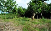 """""""Ban phát đất rừng cho quan chức"""":Báo cáo không minh bạch"""