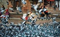 Triển lãm ảnh ủng hộ nạn nhân động đất Nepal