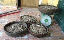 Phát hiện 50kg tiền cổ khi đào đất