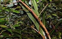 70 loài động, thực vật mới được phát hiện tại Việt Nam