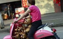 Thế giới lên án lễ hội thịt chó ở Quảng Tây, Trung Quốc
