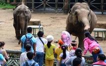1/3 diện tích Safari Sài Gòn dành cho khách sạn, giải trí