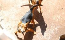Chó cắn chết người, chủ nuôi chịu trách nhiệm?
