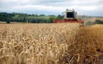 Được mùa ngũ cốc, Brazil tiếp tục phá kỷ lục về sản lượng