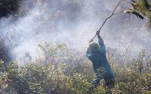 Hai giờ dập lửa cứu rừng thông 25 năm tuổi