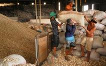 Kiến nghị không áp thuế xuất khẩu khoai mì lát