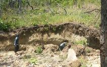 Khởi tố chủ trang trại phá 5,3ha rừng làm trại chăn nuôi
