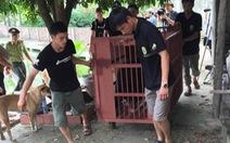 Giao 4 gấu ngựa cho Trung tâm cứu hộ gấu tại Tam Đảo