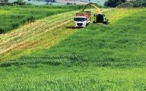 Chỉ 1% doanh nghiệp bỏ vốn vào nông nghiệp