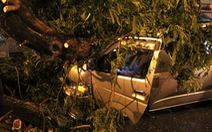 Cây ngã đè ôtô giữa trung tâm Sài Gòn, tài xế bị thương