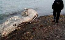 Sinh vật biển kỳ bí xuất hiện ở Nga