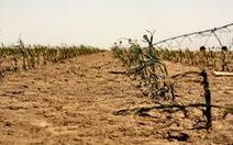 Thời tiết cực đoan ảnh hưởng nghiêm trọng đến nông nghiệp