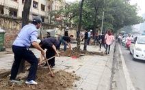 Hà Nội lại thay cây mỡ mới trồng trên phố Nguyễn Chí Thanh