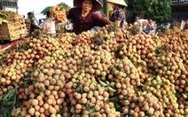 Bắc Giang tiêu thụ vải thiều thuận lợi, giá bán ổn định