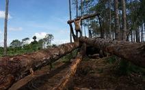 Bắt hai người đầu độc thông rừng