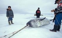 5 quốc gia Bắc Cực cùng bảo vệ nguồn cá tại Bắc Băng Dương