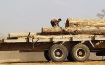 Myanmar xử tù công dân Trung Quốc vì phá rừng
