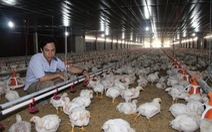 Đề nghị điều tra bán phá giá thịt gà
