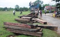 Lâm tặc thả trôi gỗ theo dòng nước thủy điện