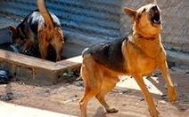 Mỗi ngày 90 người ở TP.HCM chích ngừa vì chó, mèo cắn