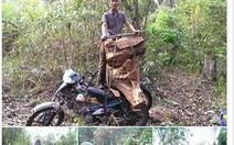 Không khởi tố vụ phá rừng rồi tung ảnh lên facebook