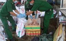Bắt quả tang lần thứ 6 xe Mai Lan chở thịt gà bẩn