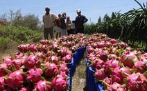TQ phá giá đồng nhân dân tệ: Xuất khẩu hàng Việt thêm khó