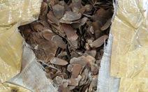 Bắt giữ 42,2kg vảy tê tê châu Phi nhập khẩu trái phép