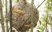 Vô tình giẫm tổ ong, người đàn ông bị ong đốt gần 50 mũi