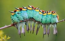 """Chùm ảnh chim """"ôm nhau"""" ủ ấm cực dễ thương"""