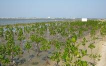 Bình Thuận trồng rừng ven biển để chống biến đổi khí hậu