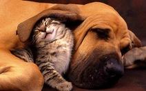 Ngắm bộảnh đáng yêuchómèo kết bạn