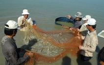 Tăng cường phòng, chống dịch bệnh trên tôm nuôi nước lợ