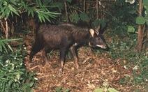 Động vật rừng tại Đắk Nông có dấu hiệu suy giảm