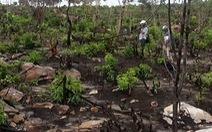 Những đòn phép chiếm đất rừng Phú Quốc